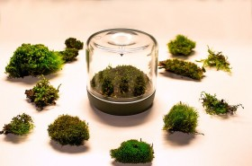 Finding-the-right-moss-for-your-lovely-little-mossarium